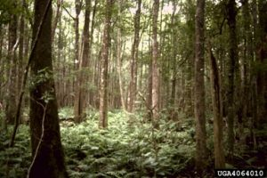 One of God's storage areas; The Forest